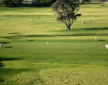Patea Golf Club